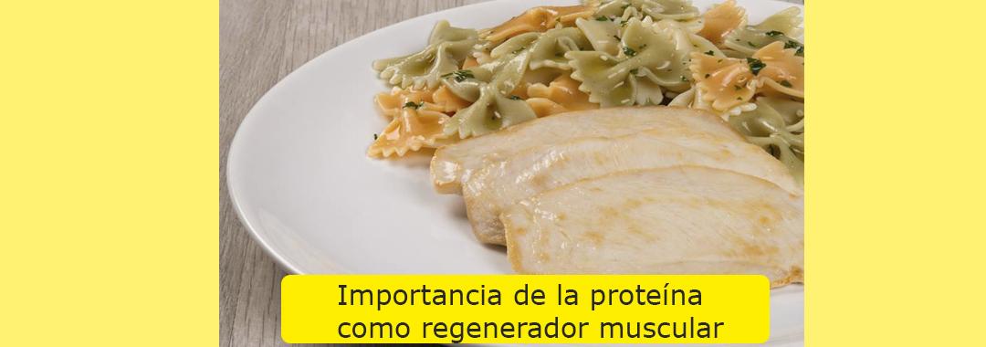 La importancia de la proteína como recuperador y regenerador muscular